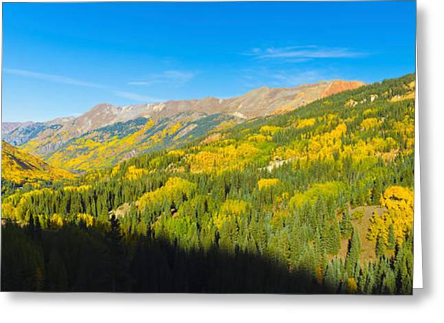 Autumn Colors Greeting Cards - Aspen Trees On A Mountain, Red Greeting Card by Panoramic Images