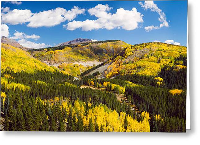 Kendall Greeting Cards - Aspen Trees On A Mountain, San Juan Greeting Card by Panoramic Images