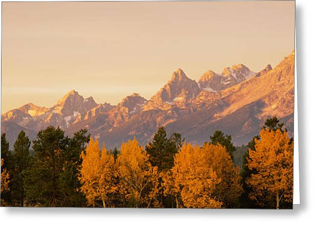 Geography Greeting Cards - Aspen Trees On A Mountainside, Grand Greeting Card by Panoramic Images