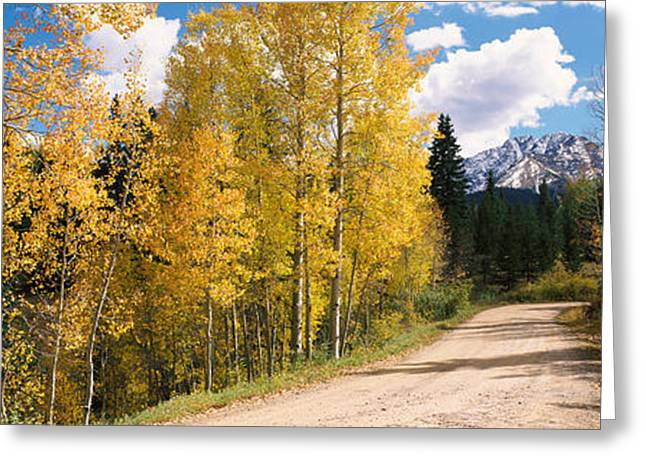 Autumn Colors Greeting Cards - Aspen Trees On Both Sides Of A Road Greeting Card by Panoramic Images
