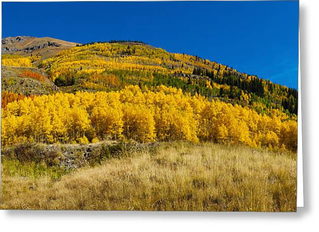 Autumn Colors Greeting Cards - Aspen Trees On Mountain, Alpine Loop Greeting Card by Panoramic Images
