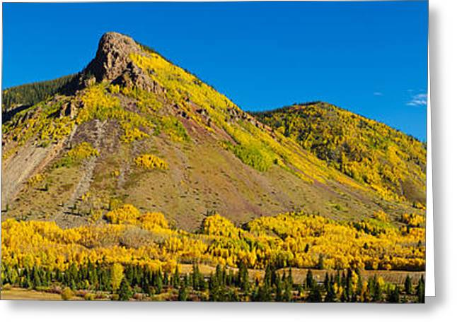 Silverton Greeting Cards - Aspen Trees On Mountain, Anvil Greeting Card by Panoramic Images