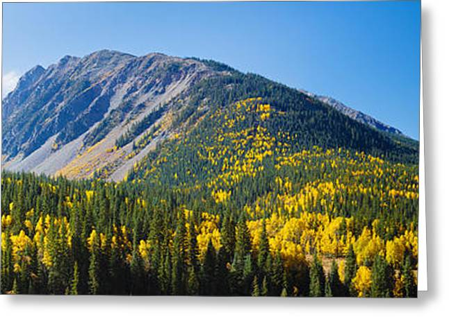 Solomon Greeting Cards - Aspen Trees On Mountain, Little Giant Greeting Card by Panoramic Images