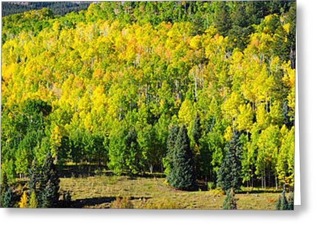 Autumn Colors Greeting Cards - Aspen Trees On Mountain, Mount Greeting Card by Panoramic Images