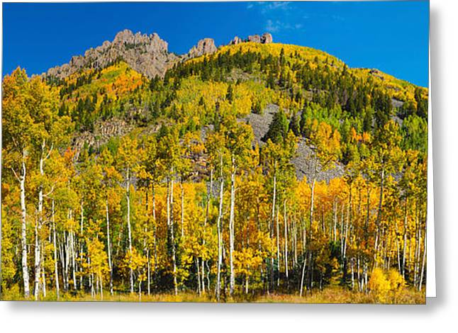 Days Pass Greeting Cards - Aspen Trees On Mountain, Ophir Pass Greeting Card by Panoramic Images