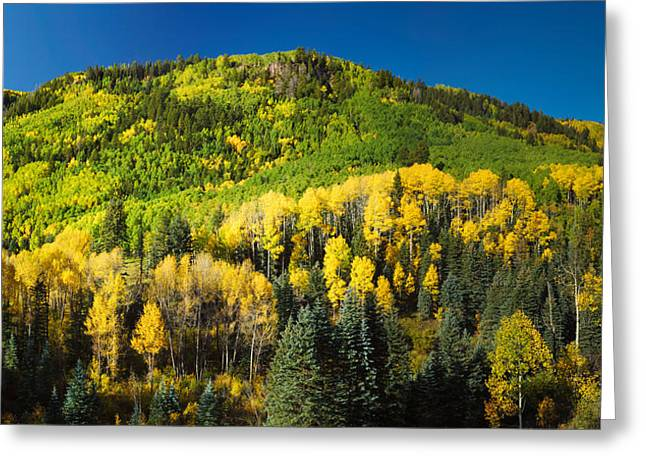 Mountain Fork Greeting Cards - Aspen Trees On Mountain, Sunshine Mesa Greeting Card by Panoramic Images