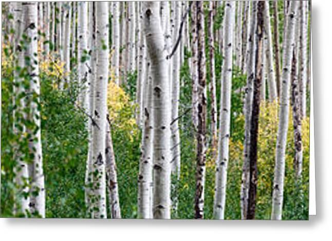 Aspen Trees Greeting Card by Steve Gadomski