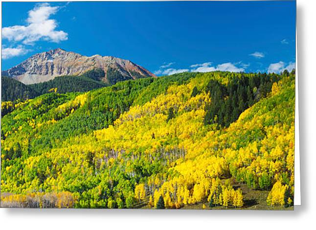 Autumn Colors Greeting Cards - Aspen Trees With Mountain Greeting Card by Panoramic Images