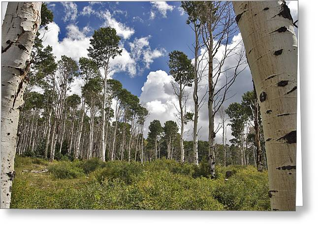 Nature Pattern Greeting Cards - Aspens Greeting Card by Adam Romanowicz