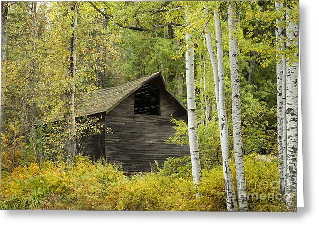 Autum Greeting Cards - Aspens and Barn Greeting Card by Idaho Scenic Images Linda Lantzy