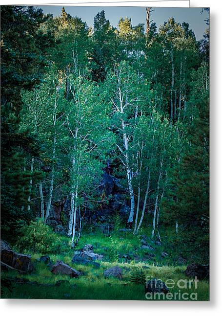 Trembling Greeting Cards - Aspens Greeting Card by Arne Hansen