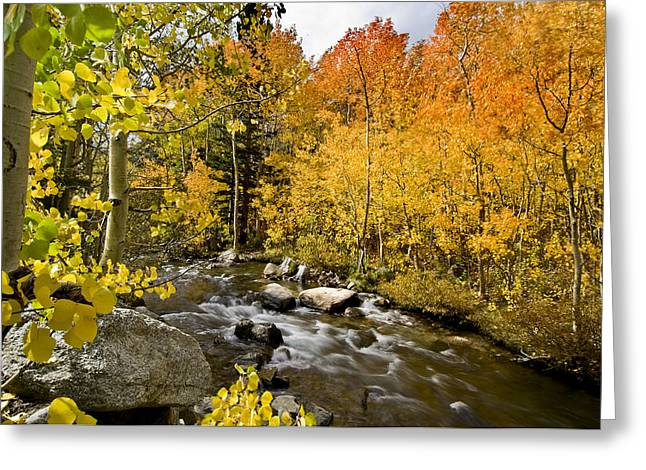 Eastern Sierra Greeting Cards - Aspens at Bishop Creek Greeting Card by Cat Connor