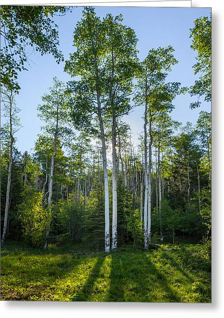 Fine Art White Nature Trees Greeting Cards - Aspens At Sunrise 1 - Santa Fe New Mexico Greeting Card by Brian Harig