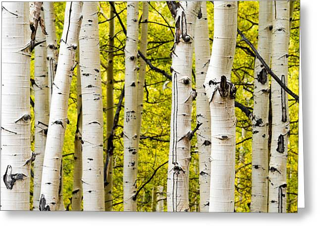 Aspens Greeting Card by Chad Dutson