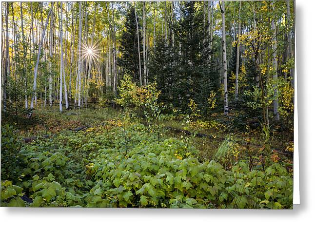 Spectacular Greeting Cards - Aspens In Autumn 5 - Santa Fe National Forest New Mexico Greeting Card by Brian Harig