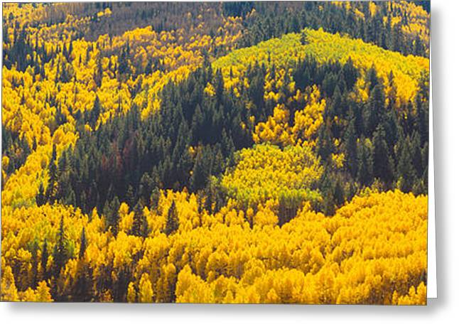 Plantlife Greeting Cards - Aspens In Autumn Near Rico, Colorado Greeting Card by Panoramic Images