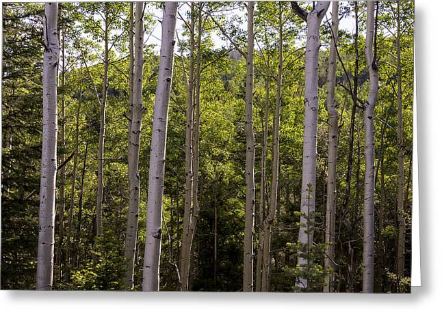 Travel Photography Greeting Cards - Aspens Of Santa Fe New Mexico Greeting Card by Brian Harig