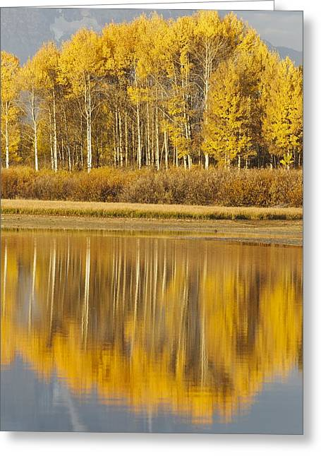 Greater Yellowstone Ecosystem Greeting Cards - Aspens Reflected In A Pool In The Snake Greeting Card by David Ponton