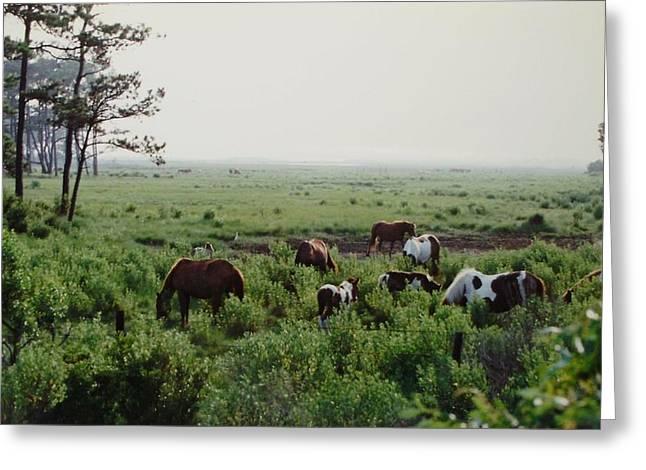 Assateague Herd 2 Greeting Card by Joann Renner