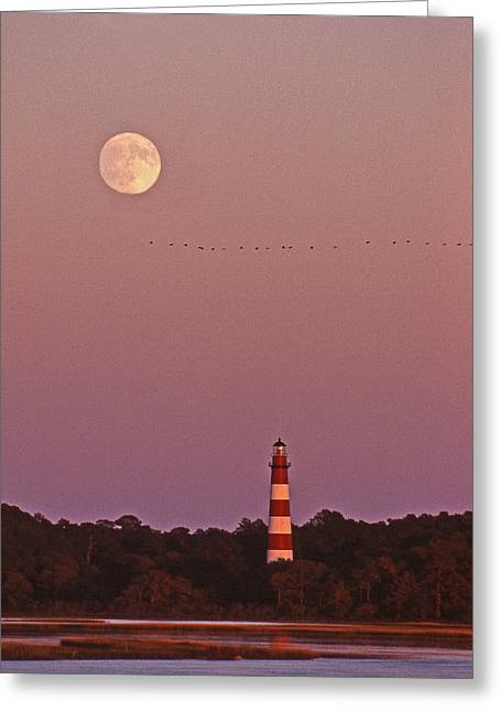 Photos Of Birds Greeting Cards - Assateague Lighthouse Greeting Card by Skip Willits
