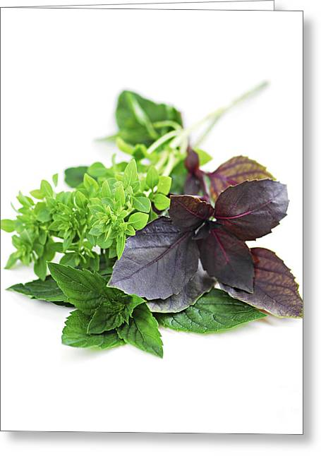 Various Greeting Cards - Assorted basil herbs Greeting Card by Elena Elisseeva