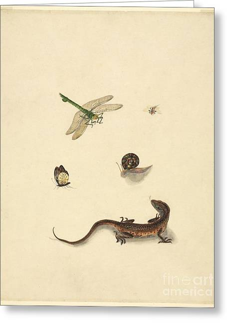 Invertebrates Greeting Cards - Assorted Chinese Animals, 19th Century Greeting Card by Natural History Museum, London