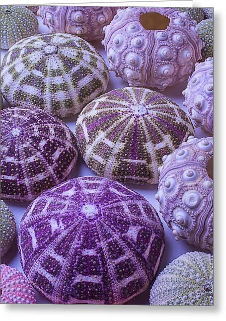 Row Greeting Cards - Assorted Sea Urchins Greeting Card by Garry Gay