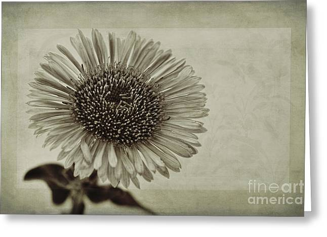 Close Focus Floral Greeting Cards - Aster with Textures Greeting Card by John Edwards