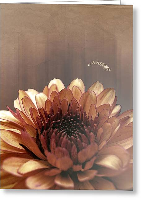 Dagmar Greeting Cards - Asteraceae Greeting Card by Dagmar Wassenberg