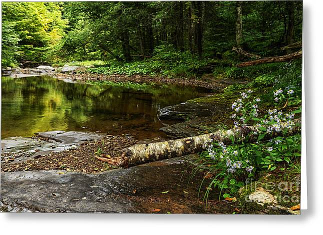Asters Greeting Cards - Asters and River Headwaters Greeting Card by Thomas R Fletcher