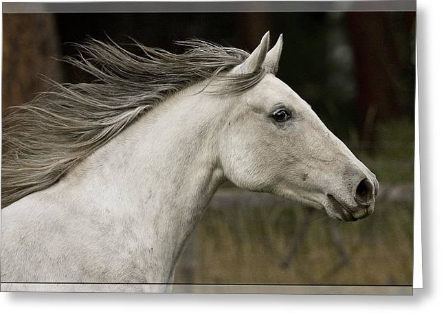 Vale Greeting Cards - At A Full Gallop D7796 Greeting Card by Wes and Dotty Weber