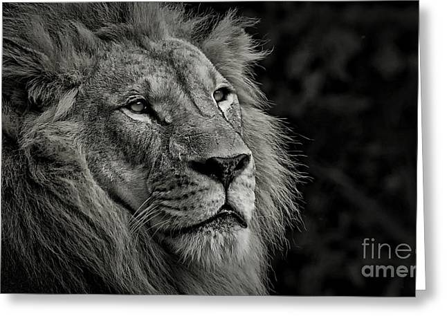 Recently Sold -  - Lions Greeting Cards - At His Best Greeting Card by Adrian Tavano