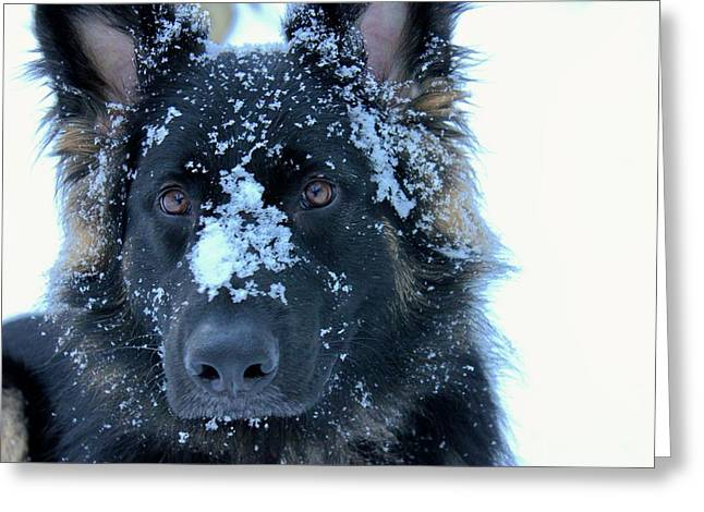 Dog In Snow Greeting Cards - At Home Greeting Card by Glenn Curtis