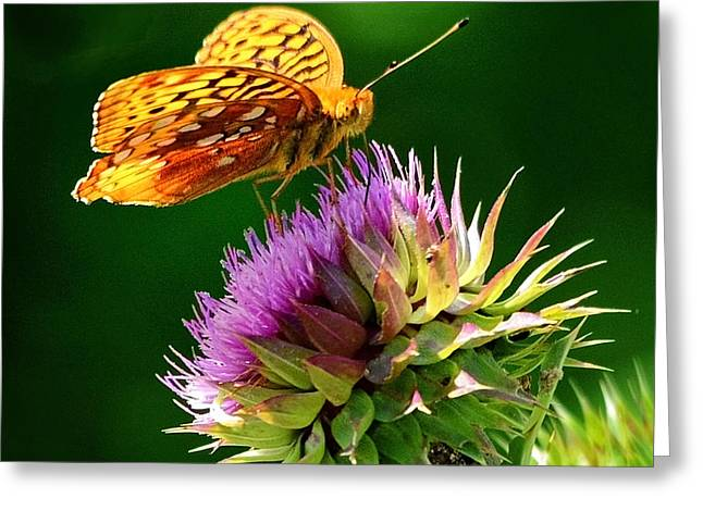 Pea Ridge Greeting Cards - At Home in Wildflowers Greeting Card by Nava  Thompson