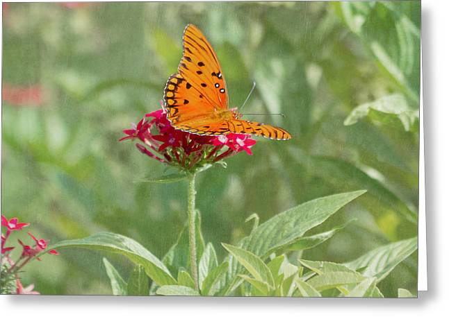 Kim Hojnacki Greeting Cards - At Rest - Gulf Fritillary Butterfly Greeting Card by Kim Hojnacki