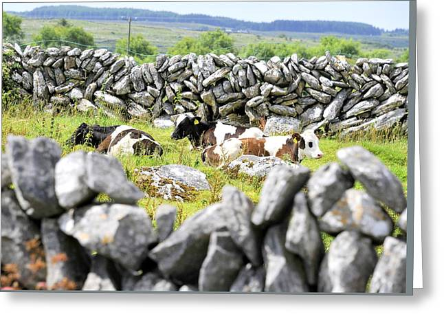 Commercial Photography Mixed Media Greeting Cards - Cows in Hiding Greeting Card by Dave Byrne