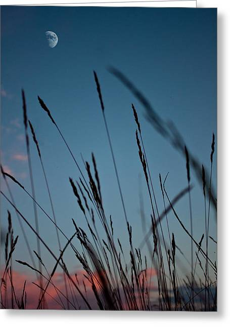 Fall Grass Greeting Cards - At the Fall of Night Greeting Card by K Hines