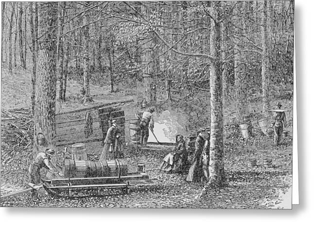 Collects Greeting Cards - At The Maple Syrup Camp, Illustration From Harpers Weekly, 1867, From The Pageant Of America Greeting Card by American School