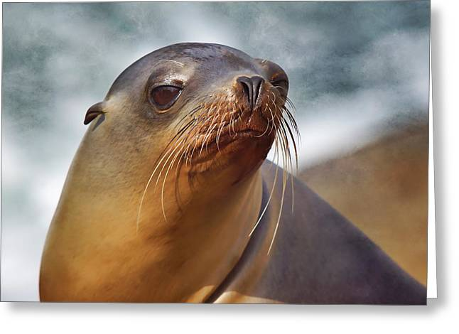 California Sea Lions Greeting Cards - At the Sea Greeting Card by Leda Robertson