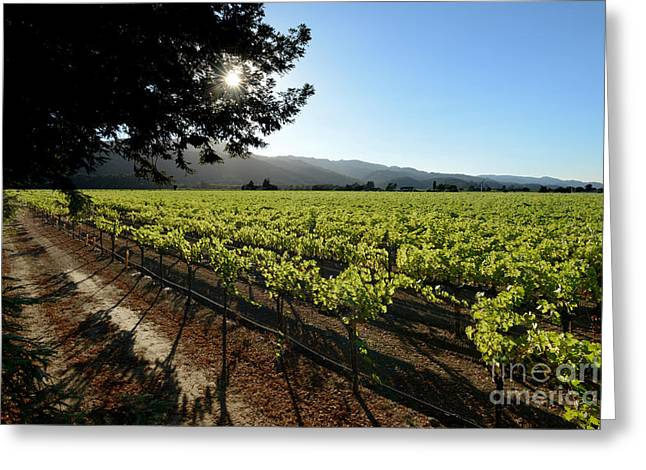 Wine Vineyard Greeting Cards - At the Vineyard Greeting Card by Jon Neidert