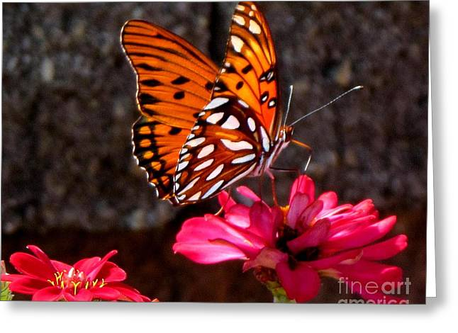 Original Photographs Greeting Cards - At Work Greeting Card by Gardening Perfection