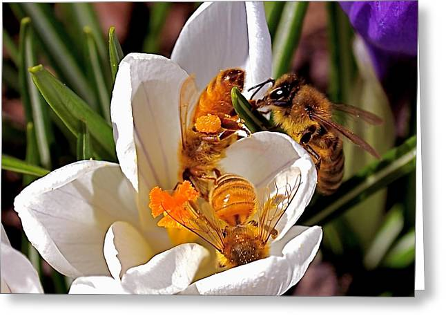 Honey Bee Greeting Cards - At Work Greeting Card by Rona Black