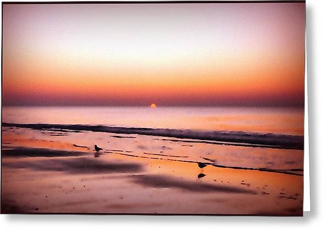 Seabirds Greeting Cards - Atlantic Dawn Greeting Card by Linda Seifried