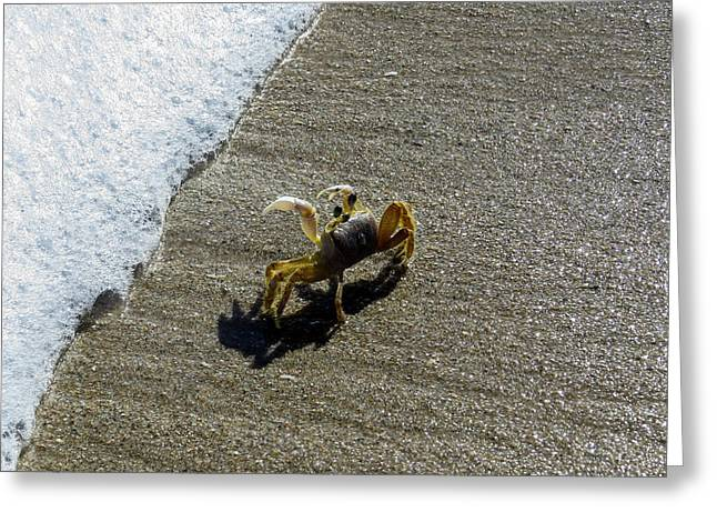 Atlantic Ghost Crab Greeting Card by Zina Stromberg