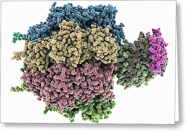 Atp Photographs Greeting Cards - ATPase molecule Greeting Card by Science Photo Library
