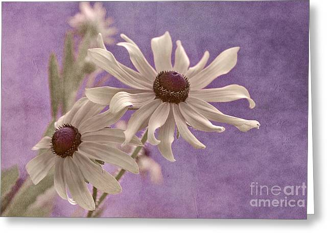 Texture Floral Photographs Greeting Cards - Attachement - s09at01b2 Greeting Card by Variance Collections