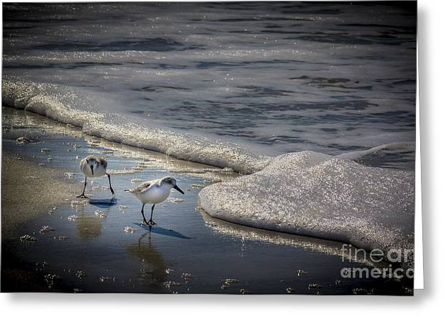Snowy Egret Greeting Cards - Attack of The Sea Foam Greeting Card by Marvin Spates