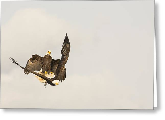 Tongass Greeting Cards - Attempted In Flight Robbery Greeting Card by Tim Grams