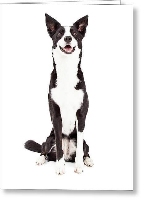Smiling Animals Greeting Cards - Attentive Border Collie Mix Breed Dog Sitting Greeting Card by Susan  Schmitz