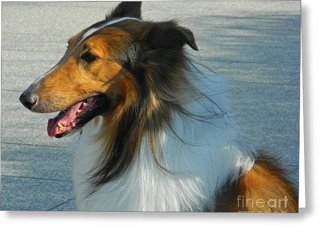 White Frame House Digital Greeting Cards - Attentive Collie Greeting Card by Emmy Marie Vickers